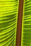 Detail von Palmblättern Lizenzfreie Stockfotografie
