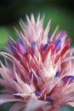 Detail von Plumeria, Schmetterlings-Welt, Coconut Creek, FL Stockfotografie