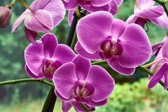 Detail von rosa Orchideenblumen stockfotografie