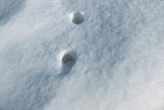 Detail von zwei Katzenbahnen im Schnee Stockfotografie