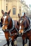 Detail von zwei Wagenpferden Stockbild