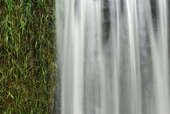 Detail waterfall. Rich in detail view of waterfall plus water grass Stock Photography