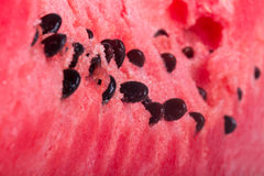Detail of Watermelon Royalty Free Stock Images