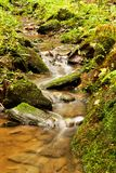 Detail weir. A small stream in the woods with the weir Royalty Free Stock Image