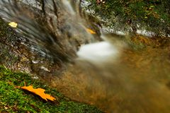 Detail weir. A small stream in the woods with the weir Stock Photography