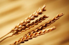 Detail of wheat Stock Image
