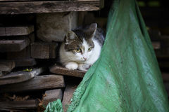 Detail on a white and tabby cat against sitting on a pile of wood with an old fabric in the lower right corner Stock Photos