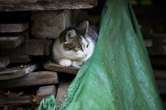 Detail on a white and tabby cat against sitting on a pile of wood with an old fabric in the lower right corner Royalty Free Stock Photo