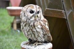 Detail of a wild owl Stock Photos