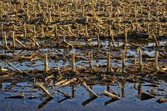 Detail of winter farmland after the rain Stock Photography