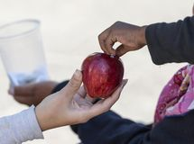 Woman`s hand giving something to a homeless. Detail of woman hand giving a red apple to a homeless boy stock photo
