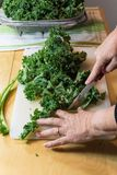 Detail of a woman using a knife to cut leaves from the tough center ribs of kale leaves, vertical aspect. Cutting the tough ribs from the leaves of kale make royalty free stock photo