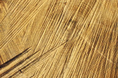 Detail of wooden cut texture Stock Photography