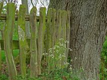Detail of wooden fence, texture and background interest. Stock Photo