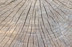 Detail of wooden stump, cut tree log, beautiful wood structure, textured ages. Pattern background royalty free stock photo