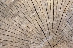 Detail of wooden stump, cut tree log, beautiful wood structure, textured ages. Pattern background stock photos