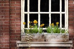 Detail of a wooden window and flowers box on brick wall. Manches Stock Image