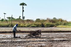 Worker plowing in rice field prepare plant rice Stock Photos