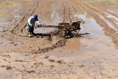 Worker plowing in rice field prepare plant rice Stock Photo