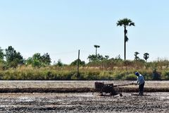 Worker plowing in rice field prepare plant rice Stock Images