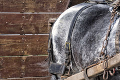 Detail of a working horse Royalty Free Stock Images