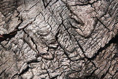 Detail of a wrinkled old bark Royalty Free Stock Photos