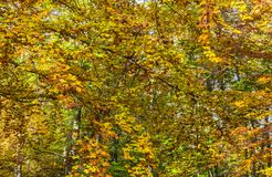 Detail in a Yellow Autumn Forest Royalty Free Stock Photos
