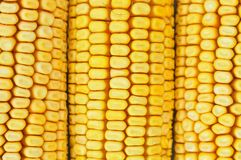 Detail of yellow corn kernels for background Stock Images