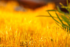 Detail yellow moss and green grass. On a wild nature Royalty Free Stock Photo