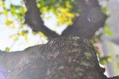 Detailbeschaffenheit des Baumasts mit bokeh Effekt lizenzfreie stockfotos
