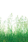 Detailed Abstract Meadow Grass Background, Large Detailed Isolated Macro Closeup, Vertical Copy Space Stock Photography