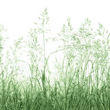 Detailed Abstract Summer Meadow Grass Background Isolated Detailed Macro Closeup Royalty Free Stock Photo