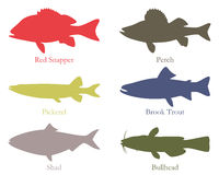 North American food fish Royalty Free Stock Photo