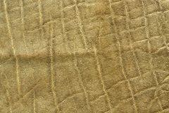 Detailed african elephant pelt. Animal texture  Loxodonta africana Stock Images