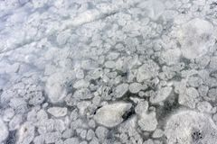 Detailed background texture of fresh thin ice . royalty free stock photos