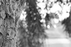 Detailed Bark. Blurred Tree Foliage Royalty Free Stock Photos