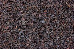 Detailed Black Tea Leaf Texture Background Royalty Free Stock Images