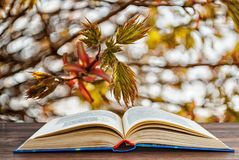 Detailed book on the background of a tree branch stock images