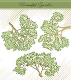 Detailed branches of trees - vector Stock Images