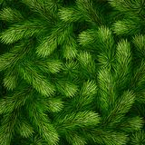 Detailed Christmas tree branches background. Detailed fir branches background for greeting card, poster, banner, website, header. Vector illustration Royalty Free Stock Photo