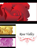 Detailed Close up of rose vector combining multico. Detailed rose vector combining multicolor Stock Image