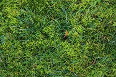 Detailed close up surface of green grass on a field stock images