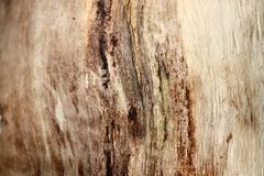 Detailed close up view on different wood surfaces showing planks logs and wooden walls in high resolution. Found in germany royalty free stock photography