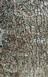 Bark Closeup of a Flowering Pear Tree. A detailed closeup of the bark of a flowering pear tree Royalty Free Stock Photo