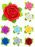 Detailed colorful roses for holiday card design Royalty Free Stock Image