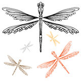 Detailed Dragonfly Stock Photo