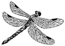 Detailed dragonfly pencil drawing style Royalty Free Stock Images