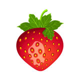 Detailed drawing of strawberry.Vector berry illustration. Stock Photography