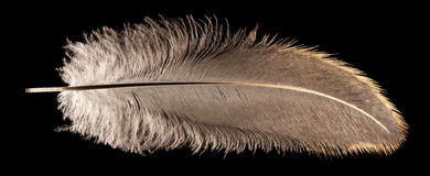 Detailed Feather Royalty Free Stock Photos