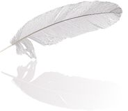 Detailed feather and reflection Royalty Free Stock Photo